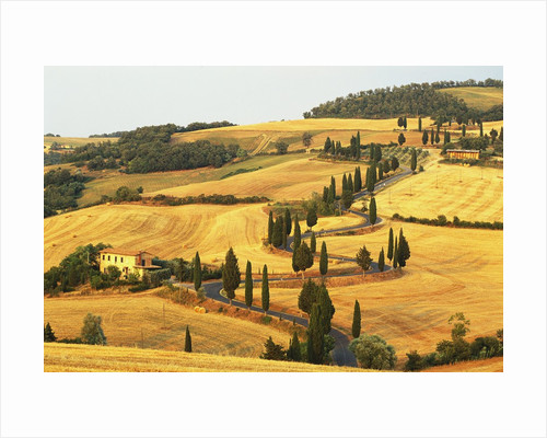 Italian Countryside of Val d'Orcia by Corbis