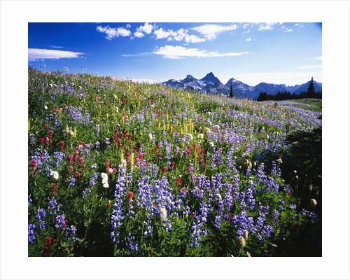 Blooming Wildflowers by Corbis