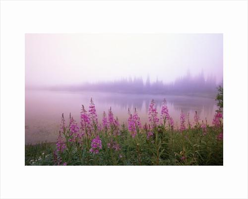 Reflection Lake at Sunrise by Corbis