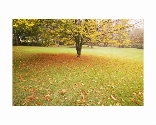 Autumn Leaves in Grass by Corbis