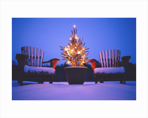 Small Christmas Tree Outdoors by Corbis