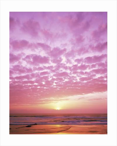 Pink Sunset Over Heceta Beach by Corbis