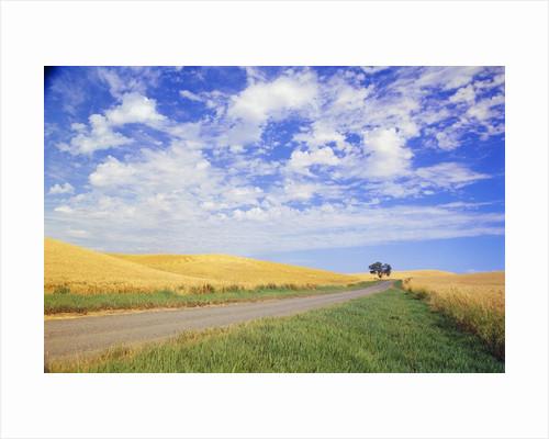 Dirt Road Running Through Farm Fields by Corbis