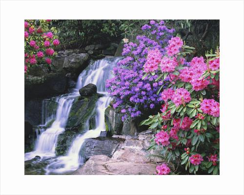 Waterfall in Crystal Springs Garden by Corbis