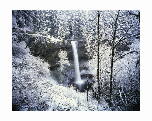 Forest Surrounding Wintry Waterfall by Corbis