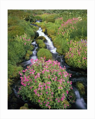 Blooming Wildflowers Surrounding Creek by Corbis