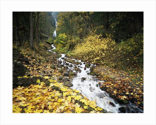 Autumn Leaves next to Wahkeena Falls by Corbis