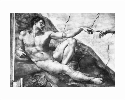 Detail of Creation of Adam by Michelangelo