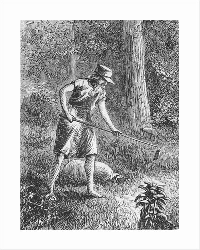 Johnny Appleseed Planting Apple Seeds in Wilderness by Corbis