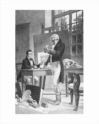 Print of Georges Cuvier Examining Animal Fossils by Corbis