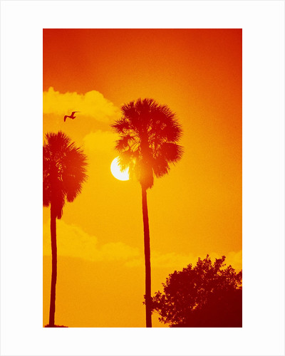 Orange Sunset and Silhouetted Palm Trees by Corbis