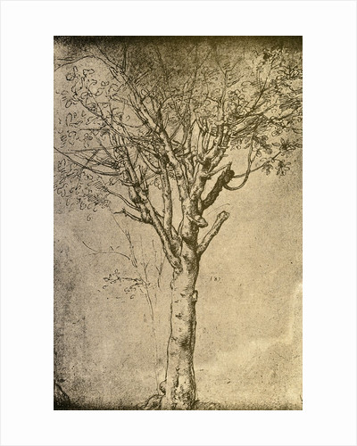 Drawing of a Tree by Leonardo da Vinci