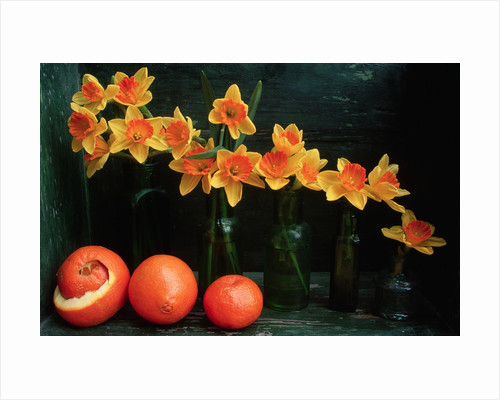 Arrangement of Daffodils and Oranges by Corbis