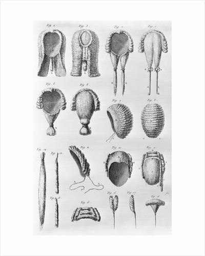 Book Illustration Showing Different Wigs by Corbis