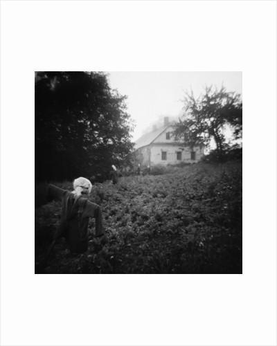 Scarecrows in a Small Vegetable Garden by Corbis