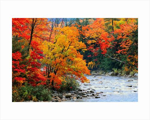 Stream in Autumn Woods by Corbis