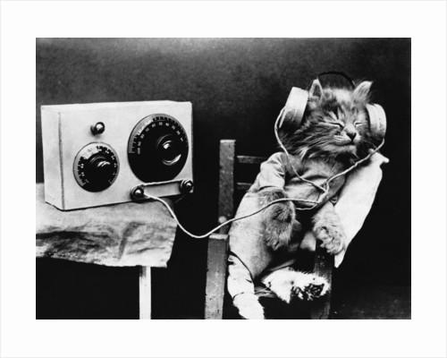 Pet Radio by Corbis
