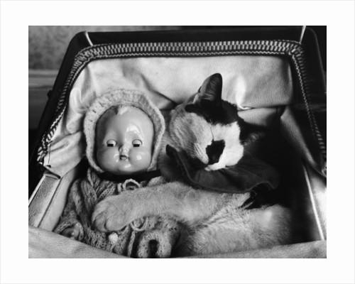 Cat Asleep in a Pram by Corbis