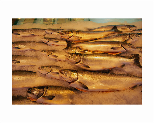 Fresh Fish at Pike Place Market by Corbis
