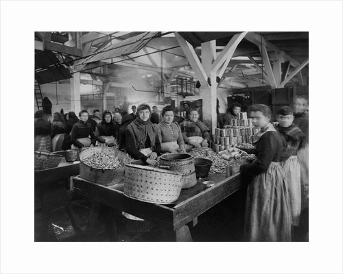 Women Canning Oysters by Corbis