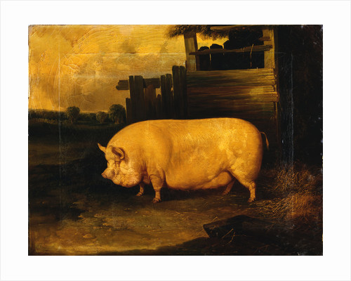A Prize Sow in a Sty by John Dalby of York