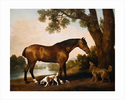 A Bay Hunter, A Springer Spaniel and a Sussex Spaniel by George Stubbs