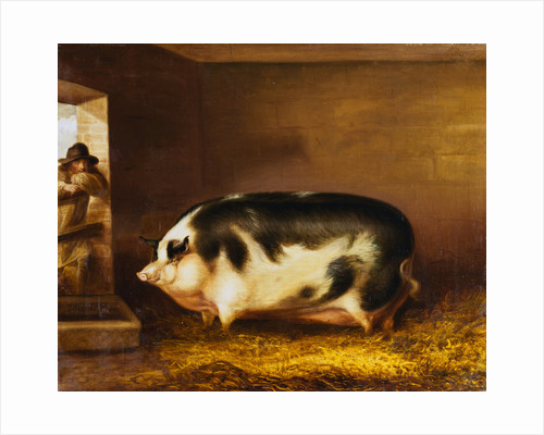 A Prize Pig in a Sty by Thomas Weaver