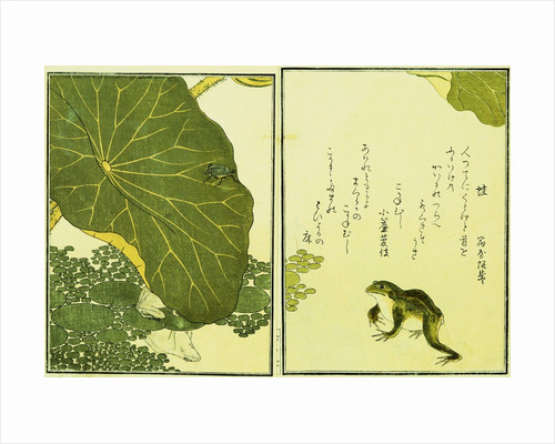 Illustration from A Picture Book of Selected Insects (Frog and Lilypad) by Utamaro