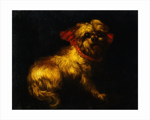 Maltese Terrier with a Red Collar by a Madrid School Painter by Corbis