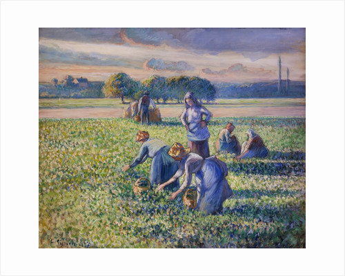 The Pea Harvest by Camille Pissarro