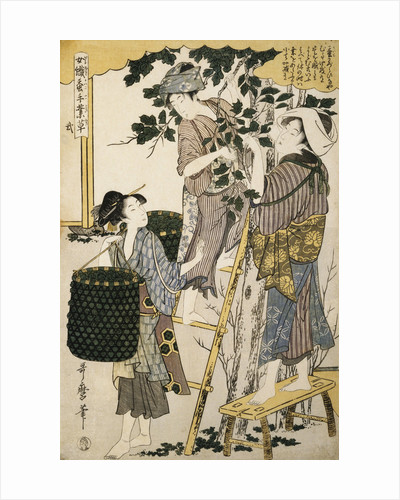 Print Depicting Women Picking Mulberry Leaves from Silkworm Culture by Women by Utamaro