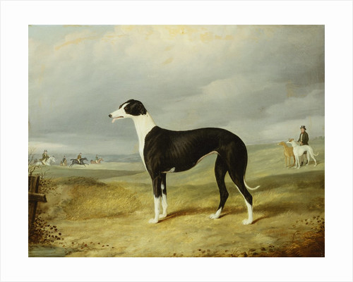 A Black and White Greyhound in an Open Landscape, with Hunters and Huntsmen Beyond by John Barwick