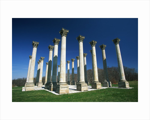 National Capitol Columns in the National Arboretum by Corbis