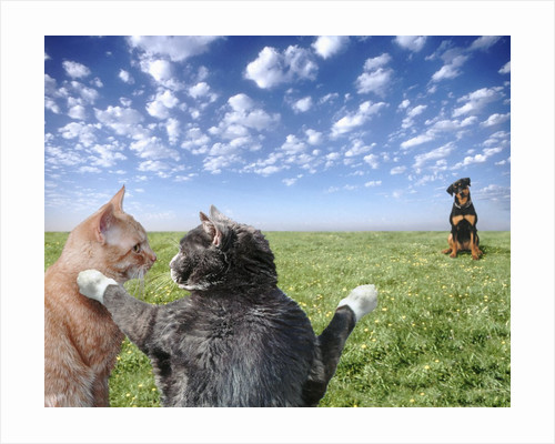 Cats and dogs by Corbis