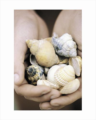 Hands Holding Seashells by Corbis