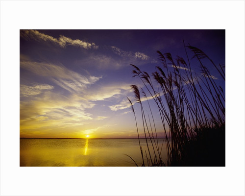 Sunset on the Barnegat Bay and Sea Oats by Corbis