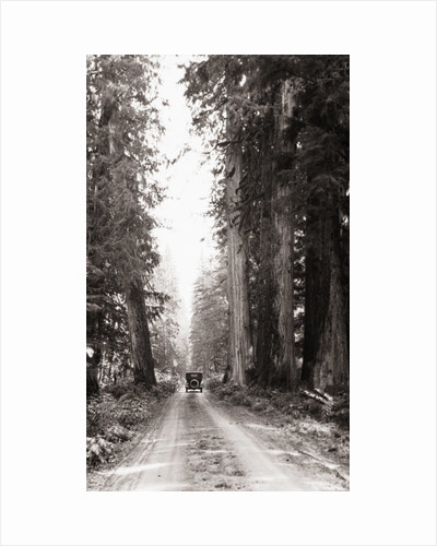 Lone Car on Forest Dirt Road by Corbis