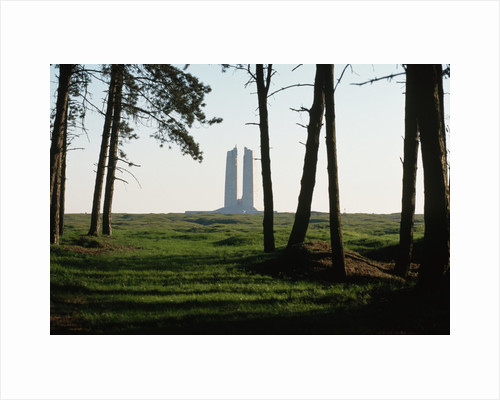 Grove of Trees at Vimy Memorial by Corbis