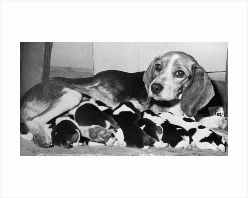 Mother and Pups Lying Together by Corbis