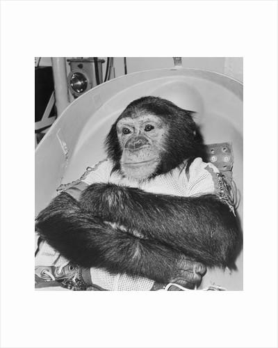 Space Travelling Monkey in Capsule by Corbis