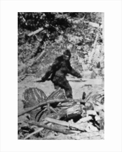 Alleged Photo of Bigfoot by Corbis