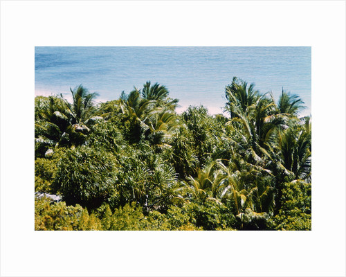 Overview of Lush Trees and Foliage by Corbis