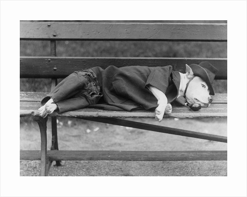 Sleeping Dog in Outfit by Corbis