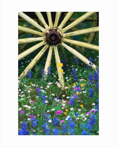 Wagon Wheel Sitting Among Wildflowers by Corbis