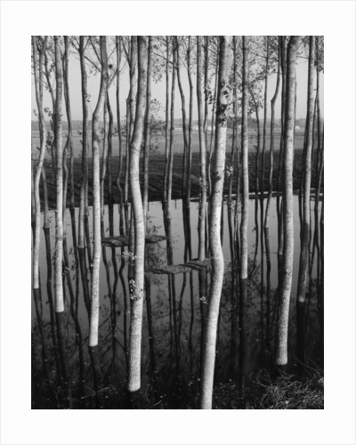 Trees in Shallow Water by Corbis