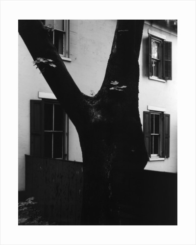 Tree and House, 1960 by Corbis