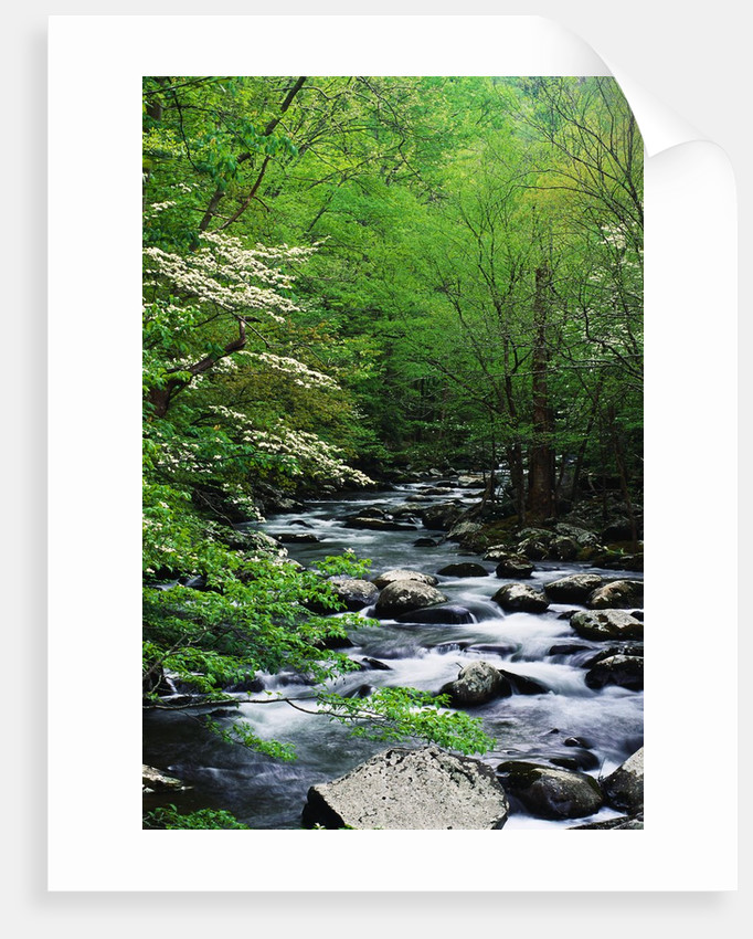 Stream in Lush Forest by Corbis