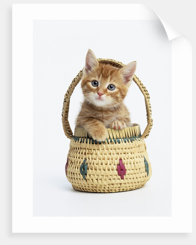 Orange Tabby Kitten in Basket by Corbis