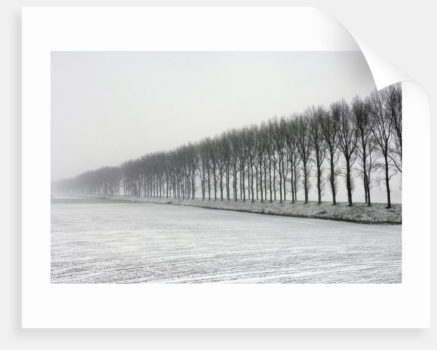 Dike with Cottonwoods in Winter by Corbis