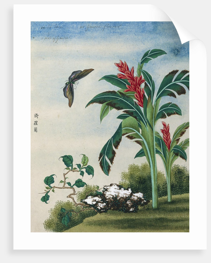 Chinese Watercolor of a Flowering Plant and a Butterfly by Corbis